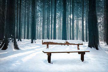 Bankje in winterbos