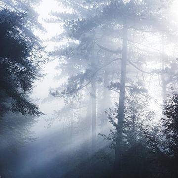 Zonnestralen die door mistig bos schijnen van Patrik Lovrin