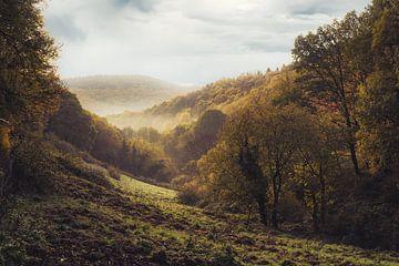 Hurtgenwald von Rik Verslype
