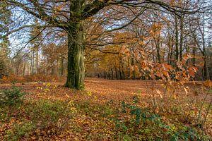 Herfst in het bos ( autumn in the forest) van