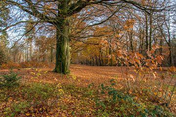 Herfst in het bos ( autumn in the forest) van Helma de With