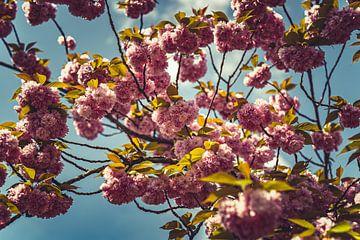 Bloesems roze 06 van FotoDennis.com