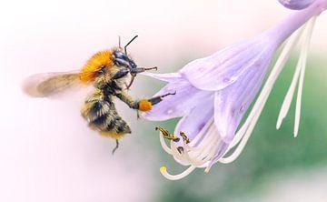Wesp op zoek naar nectar sur Martijn van Dellen