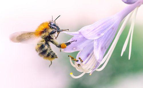 Wesp op zoek naar nectar