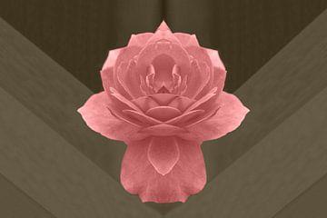 Roze roos van Corina Scheepers-de Mooij