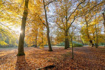Herbst im Wald von Robert van der Eng