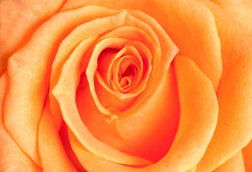 Roos van Franke de Jong