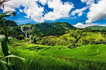 Magische rijstvelden en waterval van Corrine Ponsen