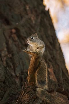 Portret van een eekhoorntje