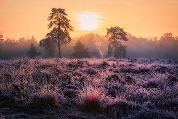 Wach auf, wenn die Sonne aufgeht ... von Mart Houtman