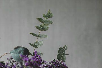 Eukalyptus von Monique de Koning