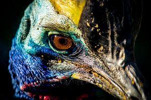 Kasuaris (Emoe, Struisvogel) van