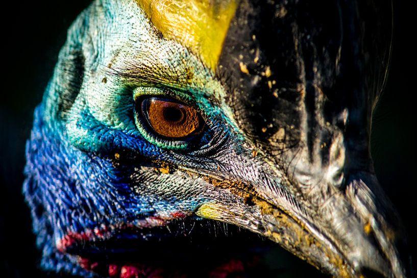 Kasuaris (Emoe, Struisvogel) van Jack Vermeulen
