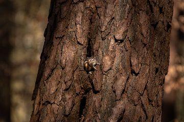 Sibirisches Erdhörnchen von Marjan Slaats