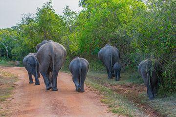 Elefanten im Minneriya-Nationalpark in Sri Lanka