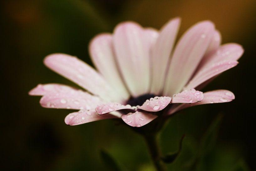 After Rain comes... van Carmen Fotografie