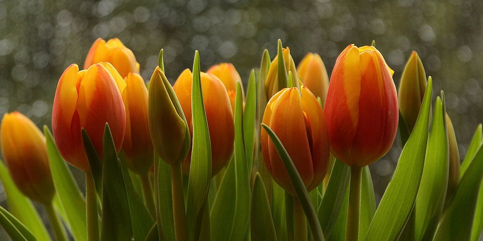 voorjaar : tulpen van Yvonne Blokland