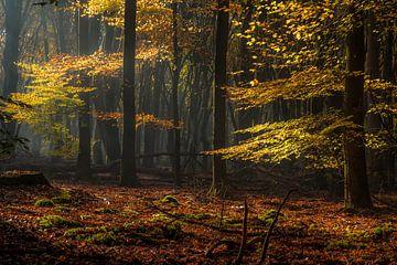 Herbstfarben von Eelke Brandsma