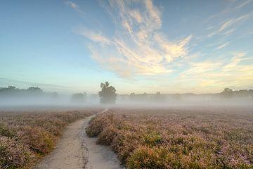 Ochtendstemming in de Westruper Heide van Michael Valjak