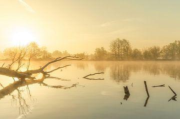 Landschap, opkomende zon tijdens mistige ochtend met boom in het water von Marcel Kerdijk
