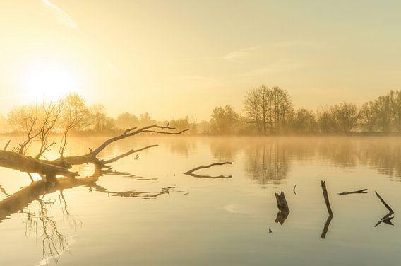 Landschap, opkomende zon tijdens mistige ochtend met boom in het water van Marcel Kerdijk