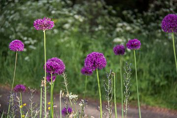 Ajuin paarse bloem van