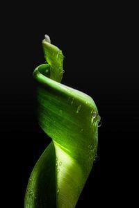 Groen van een tulp van Rik Verslype