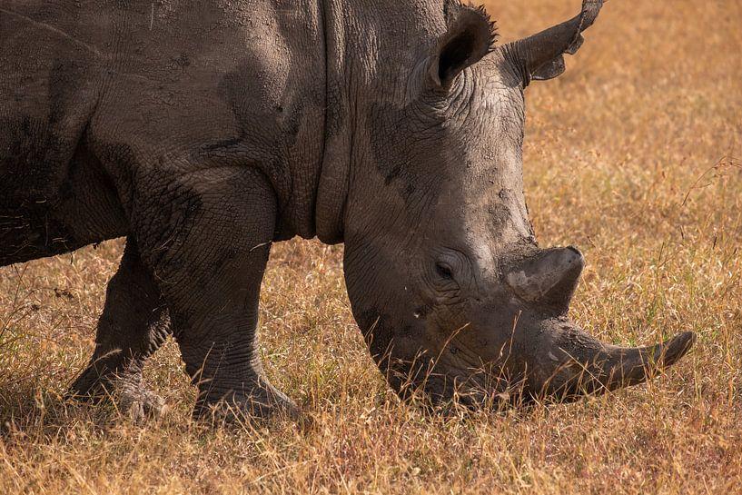 Neushoor in Ol Pejeta, Kenia van Andy Troy