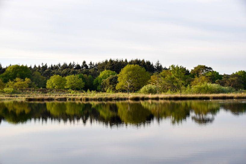 reflectie in het water van Manon Verijdt