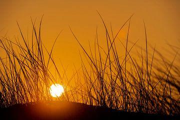 Lever de soleil derrière les dunes