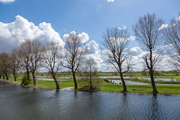 Baum-Landschaft von Dokra Fotografie