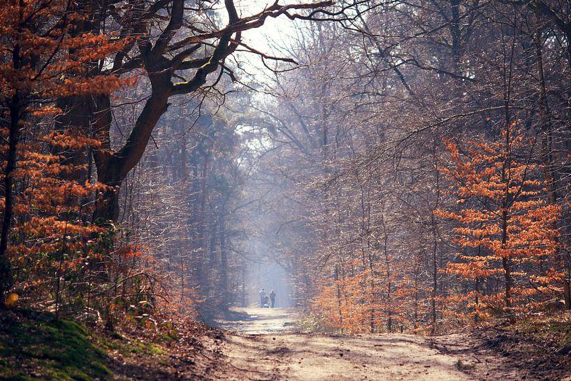 lente in het bos/ spring in the forest van Els Fonteine
