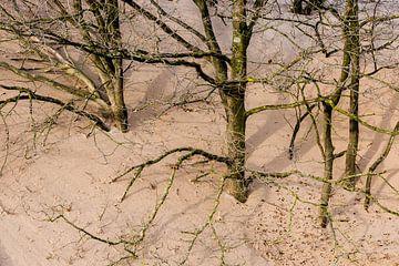 Eingegraben – Nationalpark De Loonse en Drunense Duinen von Laura Vink
