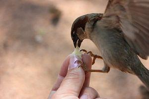 Tiere; Hungriger Spatz von Astrid Luyendijk