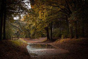 Wasserlauf durch den Wald