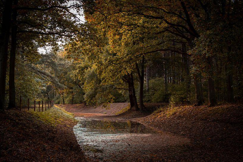 Wasserlauf durch den Wald von Robbert Wille