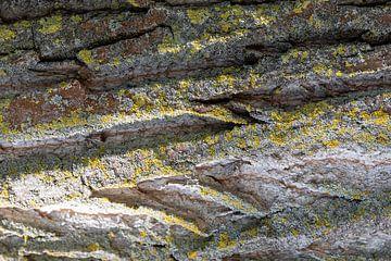 Écorce d'arbre - Structure sur