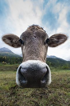 Portret van een Zwitserse koe. van Rick Ermstrang