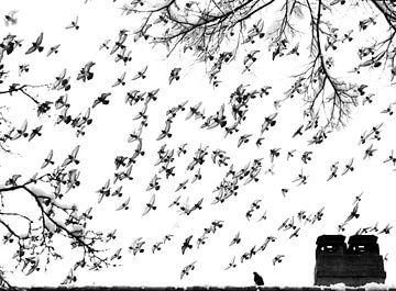 Taubenschlag von Alexander Dorn