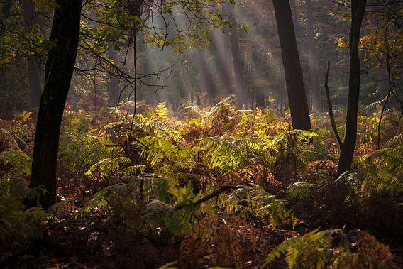 Open plek in het donkere bos met zonlicht in stralend op de varens