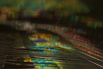 Blurred lines (spinnenweb in het zonlicht) van Marianne Jonkman