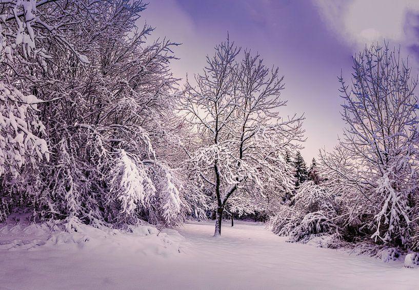 Winter wonderland van Wim van D