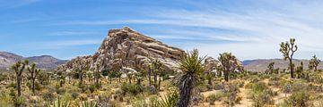 Joshua Tree National Park Panorama von Melanie Viola