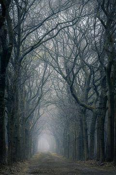 Dunkler Wald von Thomas Jansen