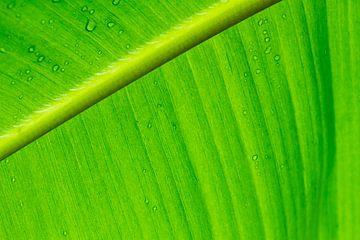 Nature's Green Delight van Qeimoy
