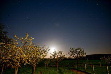 Sterren boven boomgaard van Mariska Hofman