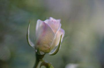 lichtroze roosje van Tania Perneel