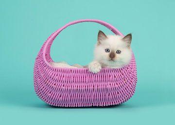 Kitten in mandje van Elles Rijsdijk