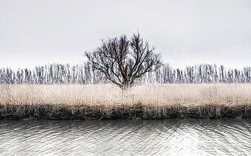 The wintertree sur Ricardo Bouman