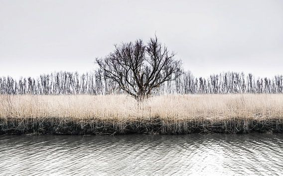 Eenzame boom in de Rhoonse Grienden - Winter